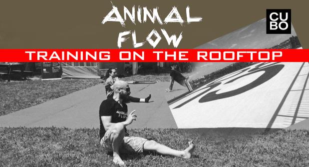 animal-flow-lezione-giugno-2019-open.png